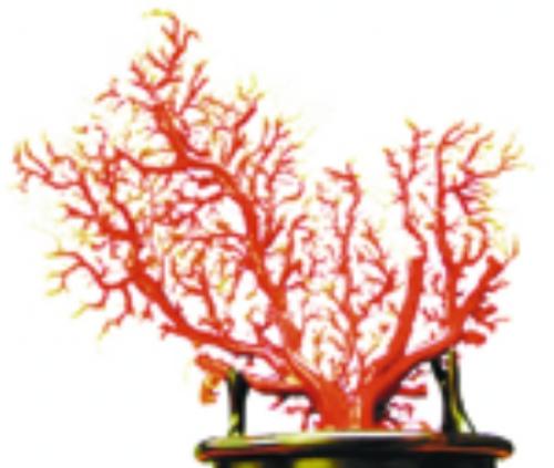 精品鉴赏:红珊瑚树(图)_财经频道_新浪四川_新