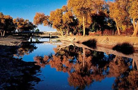 拥有世界唯一的沙漠胡杨林公园-走西闯北 与金色胡杨来一场美丽约会