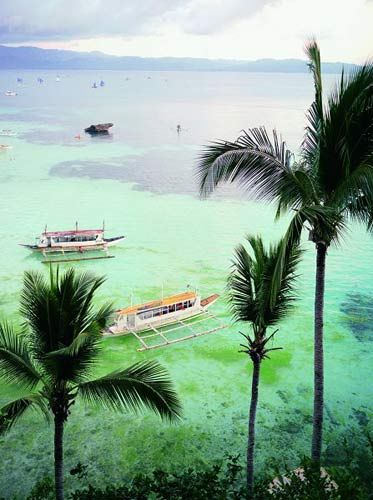 菲律宾宿雾薄荷岛猴子图片大全
