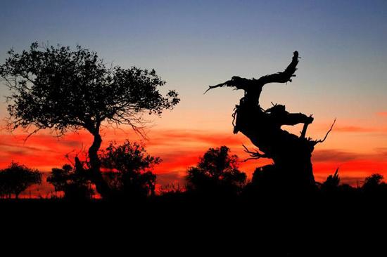 夕阳下得木垒胡杨-秋色尽赏 金秋行摄西部最美的胡杨林