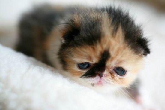 世界上最萌的小猫_资讯中心_新浪四川_新浪网