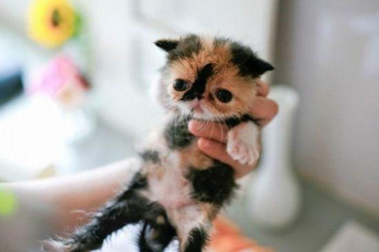 世界上最萌的小猫_资讯中心