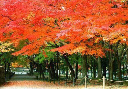 幼儿园秋天枫叶吊饰