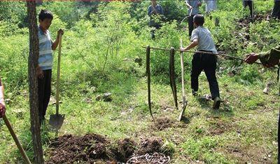 当地村民遍寻蛇踪,死蛇被统一挖坑掩埋。本报记者张剑摄