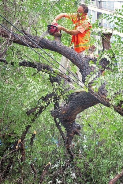 工作人员用电锯锯断树枝