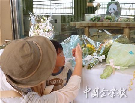 日本民众哀悼熊猫宝宝。