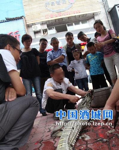 当街杀鳄鱼 来源泸州新闻网
