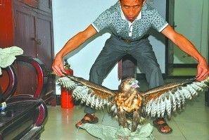 市民抓获的大鸟