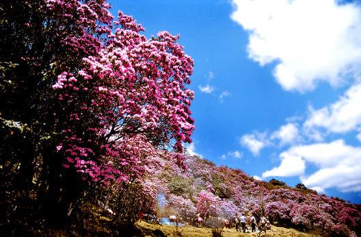 攀枝花 走进阳光花城 畅享康养圣地 高清图片