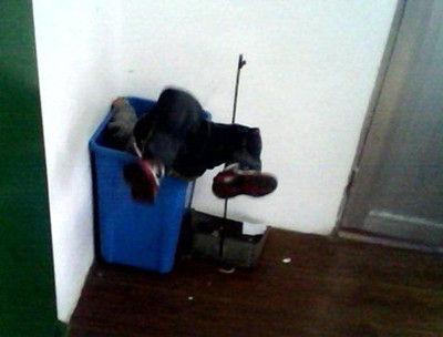 女教师揪男童耳朵离地 曾将幼童扔垃圾桶(图)
