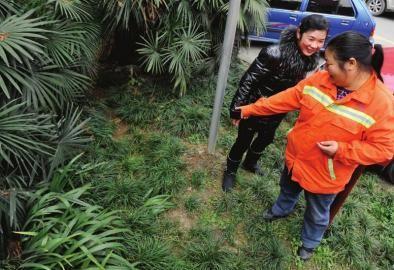 12月2日,成都清水河公园,环卫工人在草丛里发现了弃婴。