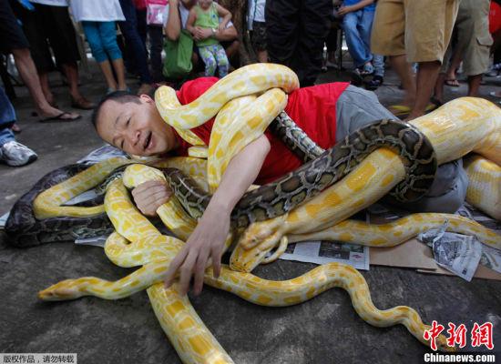 """菲律宾男子街头与群蛇""""缠绵""""迎蛇年"""