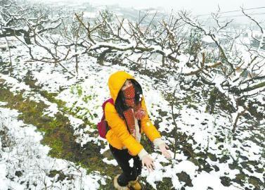 龙泉山上飘起了雪花,一名游客在雪地里玩雪。张磊摄