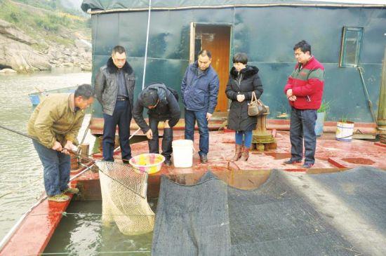 昨天上午,合江县长江边一船型网箱,执法人员提取黄辣丁样品