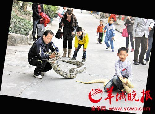 遛体重近百公斤的大蟒蛇!