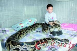 13岁男孩与蟒蛇同居12年