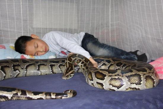 小男孩与巨蟒同睡一床