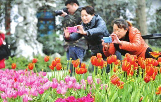 成都市文化公园内,不少市民已提前来拍摄春花。吴小川摄