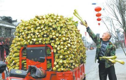 2月18日,彭州濛阳镇,菜农正将莴笋装车。