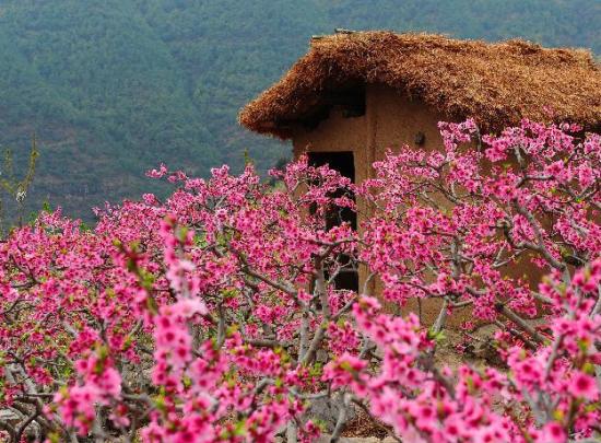 四川春天在哪里在那片桃花盛开的地方