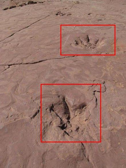 清晰可见的恐龙足迹。