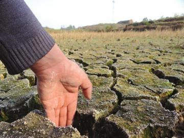 干旱持续,田里出现裂缝。(王林远 摄)