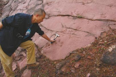 新发现的恐龙足迹化石。
