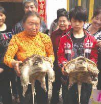 被抓到的大乌龟