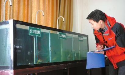 工作人员在观察生物监测池的小鱼。