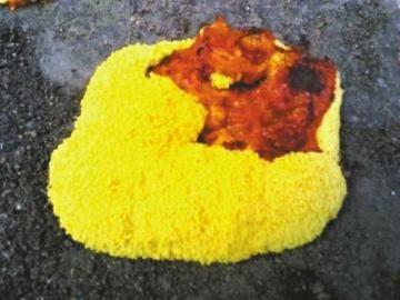 柔软金黄色的不明物体。