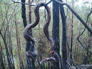 被雷电击的蛇