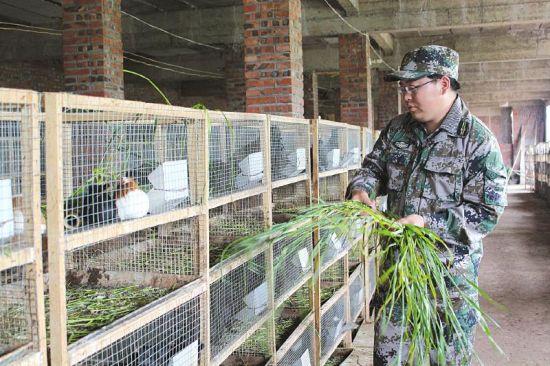 连天彬在照顾他的豚鼠。