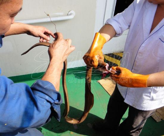 男子出海钓螃蟹误捕怪鱼 来源水母网