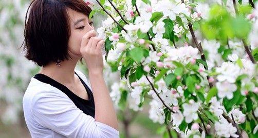 一片春心付海棠怀来海棠花观赏