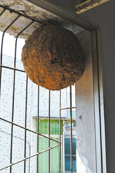 窗外悬着大马蜂窝