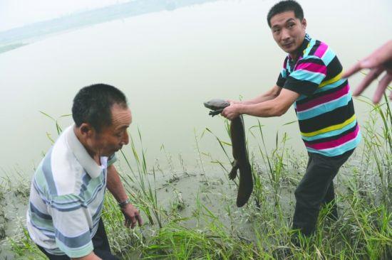 村民捡到娃娃鱼
