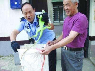 刘警官将蜥蜴装进了准备好的蛇皮口袋