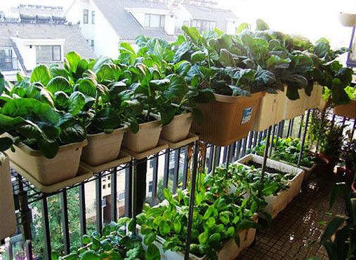 正文    编辑点评:   全封闭阳台,受温度限制较小,可选择的蔬菜范围也