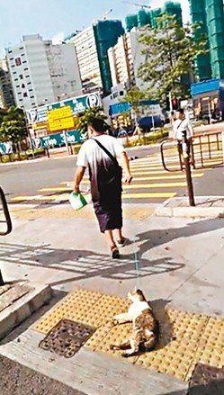 尼泊尔男子在香港街头用绳拖猫尸游街。 网上图片 来源:香港《文汇报》