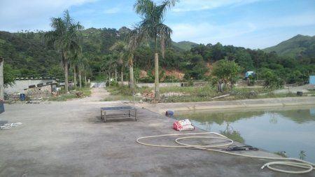 周先生所在的暹罗鳄养殖场已恢复平静。