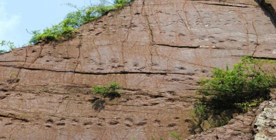 古蔺县椒园乡钟山村2组的恐龙脚印。