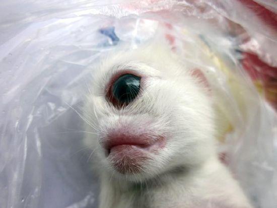 """小猫额头正中间有只""""眼"""""""