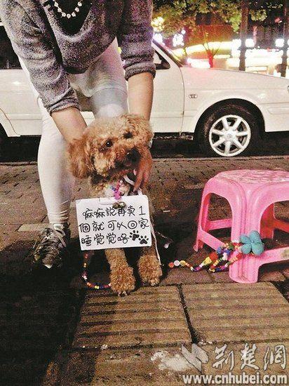 楚天都市报讯 @i小豆:遇到一只守摊的小狗狗,萌死了!