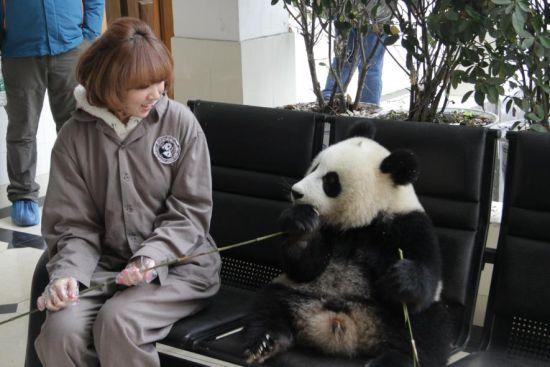 韩国可爱教主Hari 与熊猫可爱大比拼图片