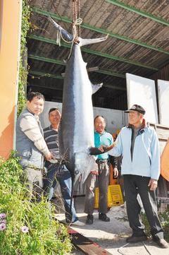 苗栗县渔民2日晚在竹南外海捕获一尾长260公分、重120公斤旗鱼。图片来源:《联合报》
