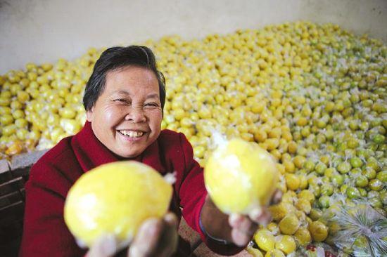 内江高桥柠檬种植户笑着展示柠檬。
