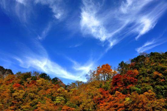 巴中光雾山红叶美景