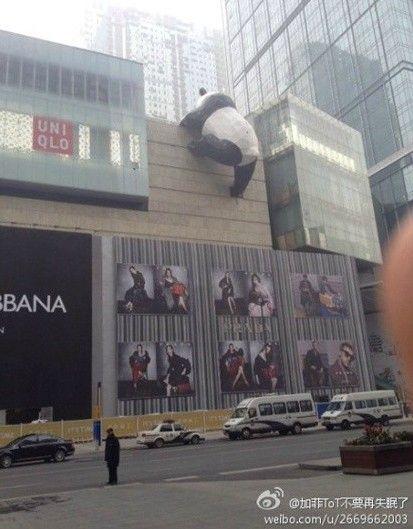 成都春熙路附近现熊猫爬墙