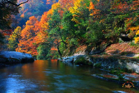 光雾山红叶。图据网友@白蚁巢穴