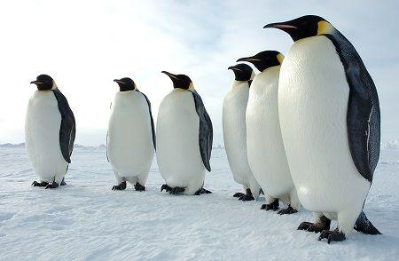 三角折纸企鹅图解步骤